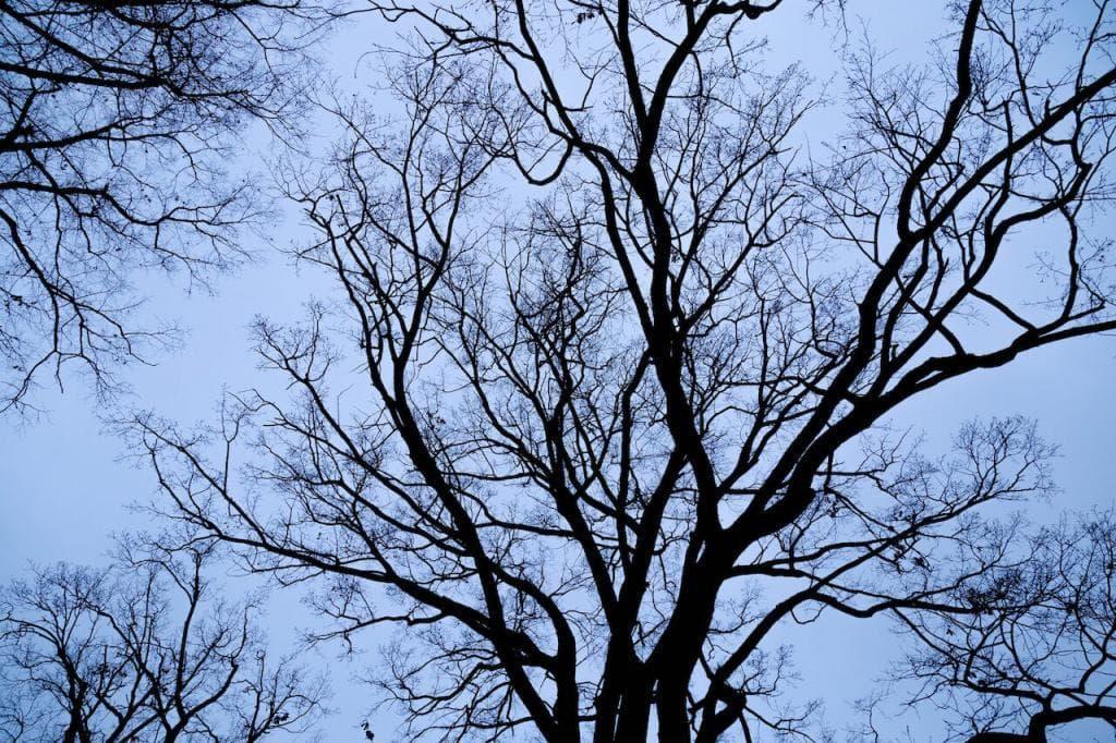 Uma árvore sem folhas contra um céu azul escuro nublado